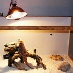 Bearded Dragon Vivarium Temperature