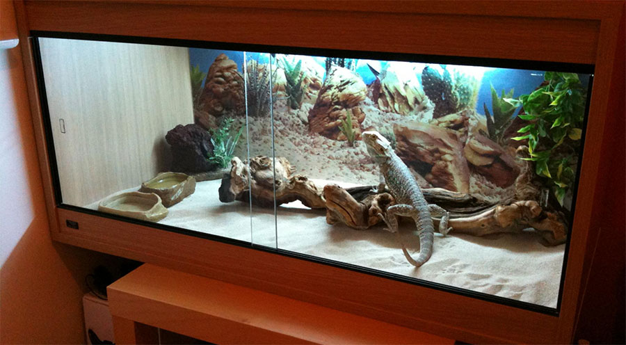 Ideas For Bearded Dragon Terrarium Decor