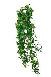 Komodo Split Philodendron Plant, 40 cm