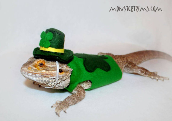 Bearded dragon clothes and other small animals: St patricks day outfit with hat
