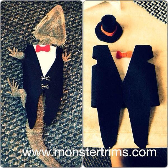 Bearded dragon clothes and other small animals: Tail coat and top hat