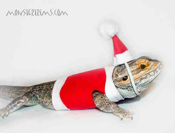 christmas costume, Bearded dragon clothes