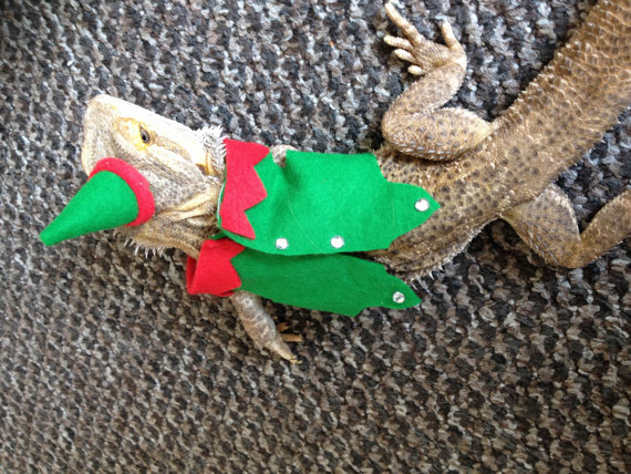 christmas fancy dress, santa, elf, Bearded dragon clothes