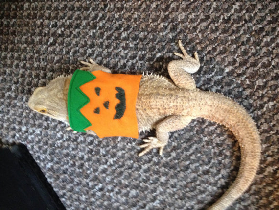 halloween fancy dress, pumpkin, witch, devil, Bearded dragon clothes