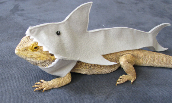 20 Bearded Dragon Costumes Every Owner Will Want