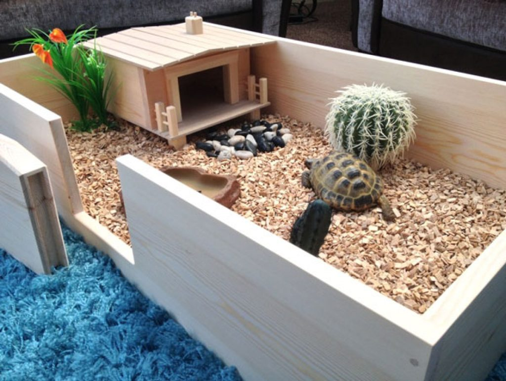 How to set up a tortoise table easy setup guide vivarium world tortoise table tortoise table aloadofball Gallery