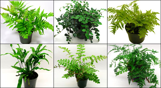 Safe Plants for Bearded Dragon Vivariums