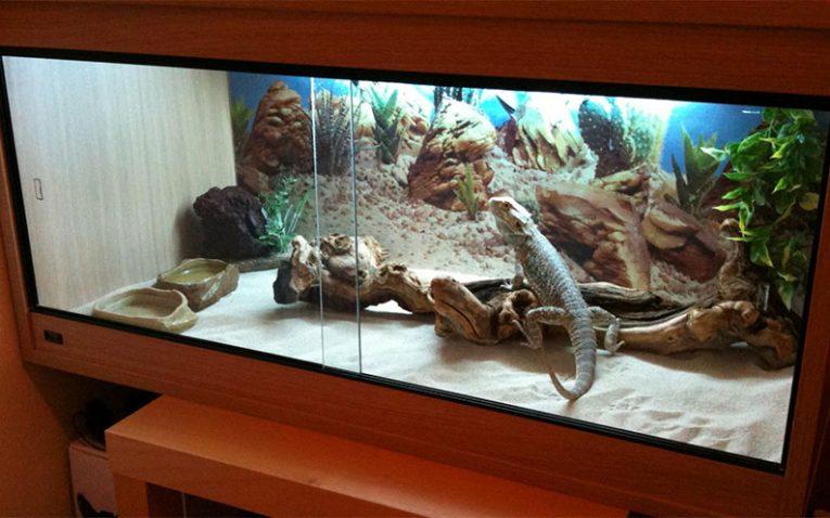 Cheap reptile cage decor