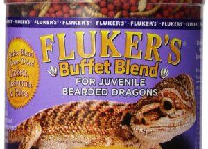 Buy Live Bearded Dragon Food Online