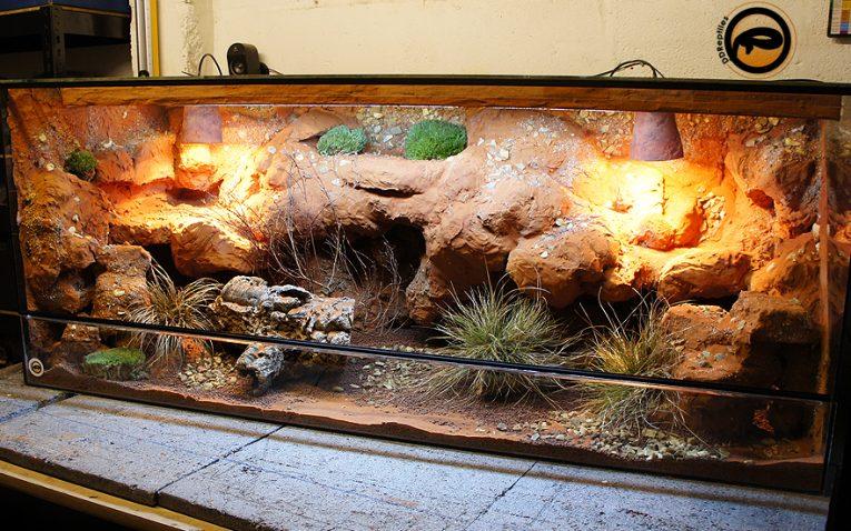 Ideas For Bearded Dragon Terrarium Decor