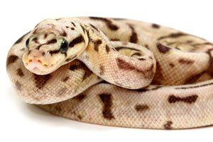 Snake Vivariums