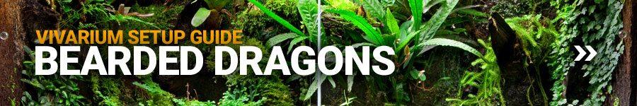 Bearded Dragon Vivarium Setup Guide