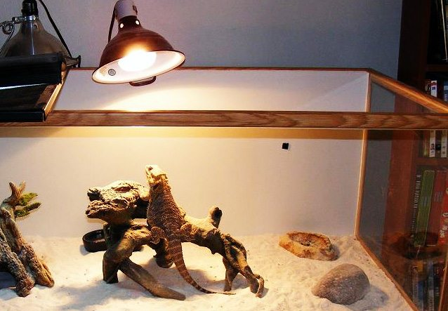 What is the right temperature for bearded dragons?