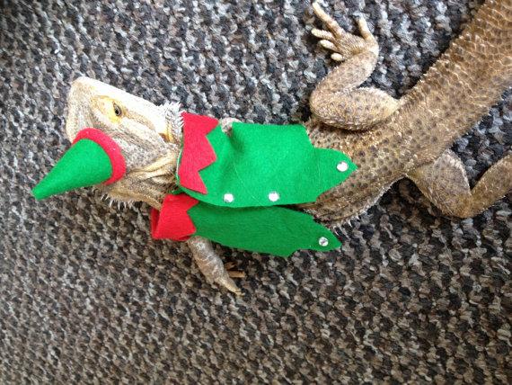 christmas fancy dress, santa, elf, Bearded dragon clothes