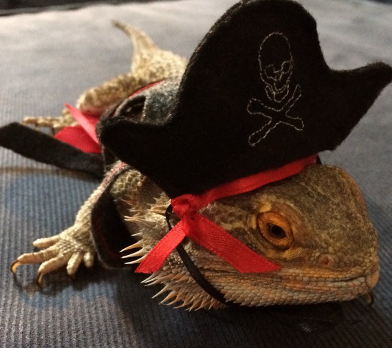 Felt Pirate Costume for Bearded Dragons. Hat and vest. Now 2 colors!