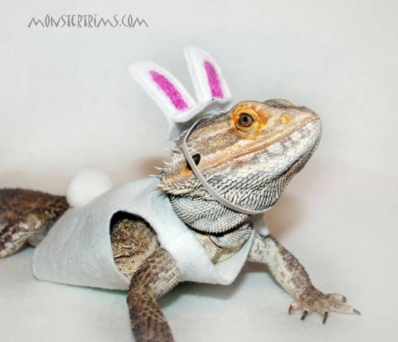 Rabbit costume, Bear costume, Bearded dragon clothes