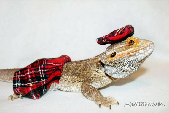 scottish kilt costume, Bearded dragon clothes/ small animal clothing