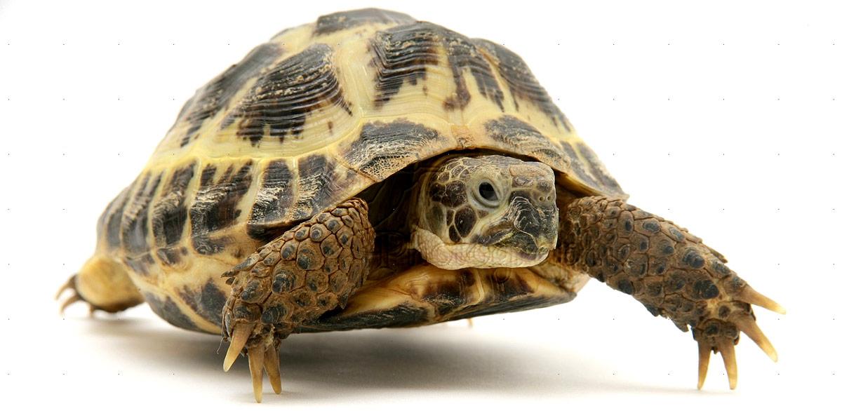 Tortoise Setup Guide