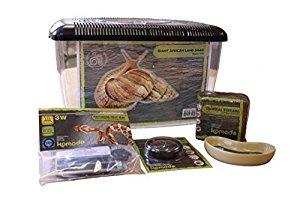 Komodo Basic Giant African Land Snail Kit