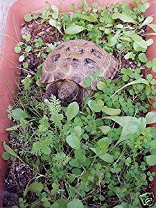 Shelled Warriors Luxury Tortoise 7000 seed mix 5g 63 species...